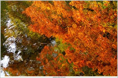 Autumn in Netherlands