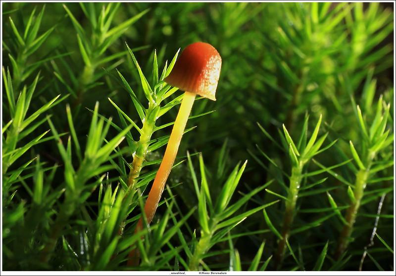 (unedited) mushroom