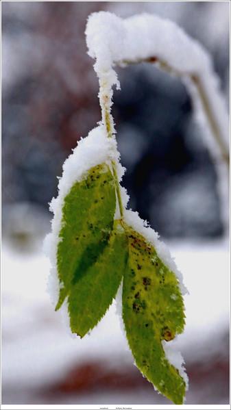 (unedited) Winter in NL