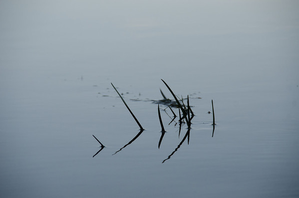 reeds in water...