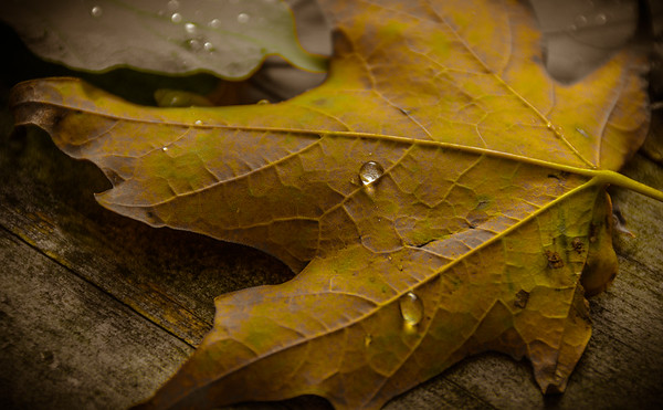 Drops on a leaf...