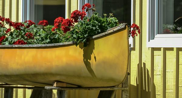 Geranium canoe