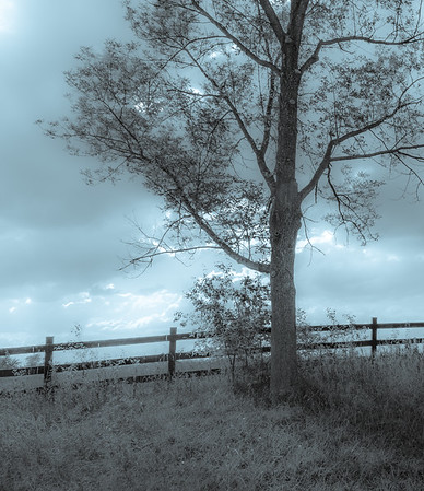 Lone tree and fence