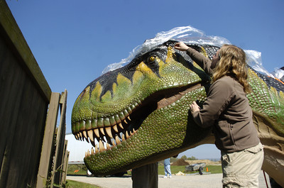 Clyde Peeling's Reptiland graphic and media artist Christian Stenbacher unwraps the head of a life size and animated T-Rex dinosaur on Friday at their facility in Allenwood.