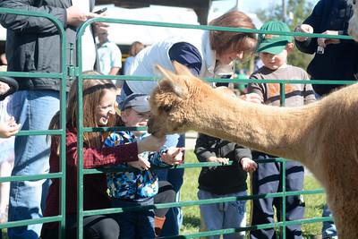 Jennifer Hoffmaster and her son Dawson, 2, Mifflinburg, feed an Alpaca on Saturday at Kelsey's Fall Festival in Mifflinburg.