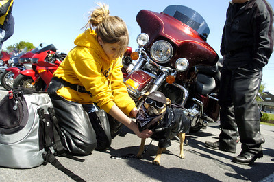 Katelyn Myer, 12, York, gets her dog Mac ready for his ride home from the Country Cupboard in Lewisburg on Friday morning during the annual May Day ride founded in 1976 by Jake Wise. More than 675 motorcycles participated in this year's ride.