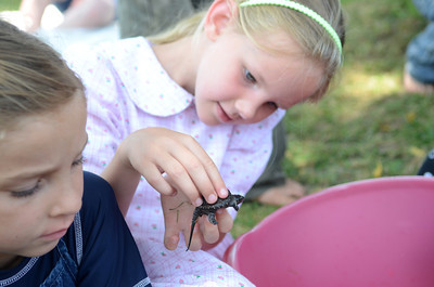 Monica Yoder, 8, Winfield, check out a baby snapping turtle at Wednesday's Turtle Derby in New Berlin.