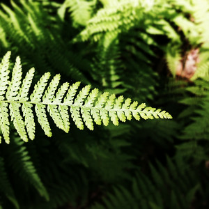 Light lands on the tip of a fern at R.B. Winter State Park on Thursday morning.