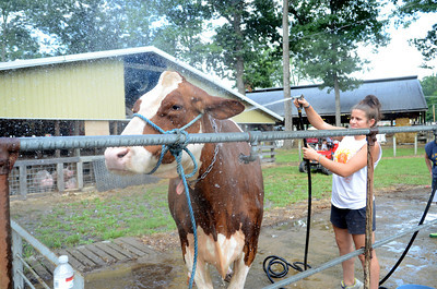 Morgan Kyler, 14, Mifflinburg, helps wash and cool off Andrea, a red and white holstein owned by the Sauers family of New Berlin.