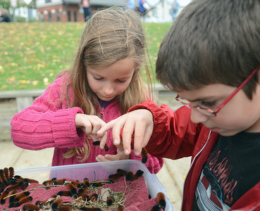Samantha Wakeman, 7 of Lewisburg, and William Dixon-Lavergne, 7 of Lewisburg, pick out their woolly worms to race at the Woolly Worm Festival on Saturday at Hufnagle Park in Lewisburg.