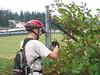 It's prime blackberry season along the farm roads of western Washington.  Mmmm, blackberries.