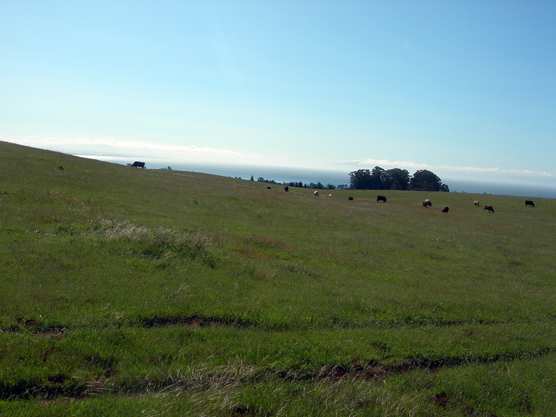 View to the right of Monterey Bay while climbing up through UCSC campus.