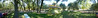 360 degree panorama of the Casa Nuestra back yard. 11 images, 66 megapixels.
