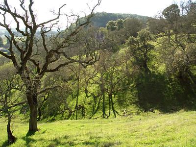 Rockville Hills Park greenery