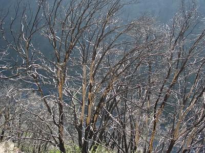 2007-01-28_11-34-24_foss