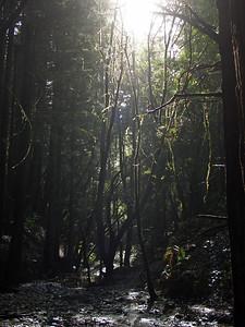 2006-02-04_13-41-28_foss