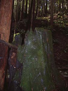 2006-02-04_13-40-34_foss