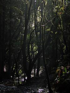 2006-02-04_13-41-34_foss
