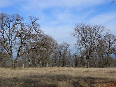 2007-01-20_12-15-39_foss