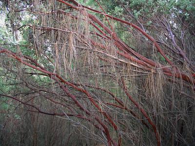 2007-01-20_12-27-41_foss