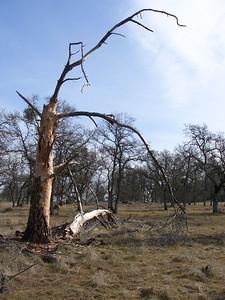 2007-01-20_12-16-03_foss