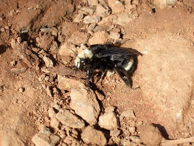 Dead bee. Or is he sleeping?
