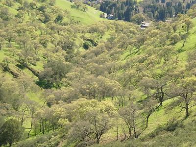 More springtime greens.