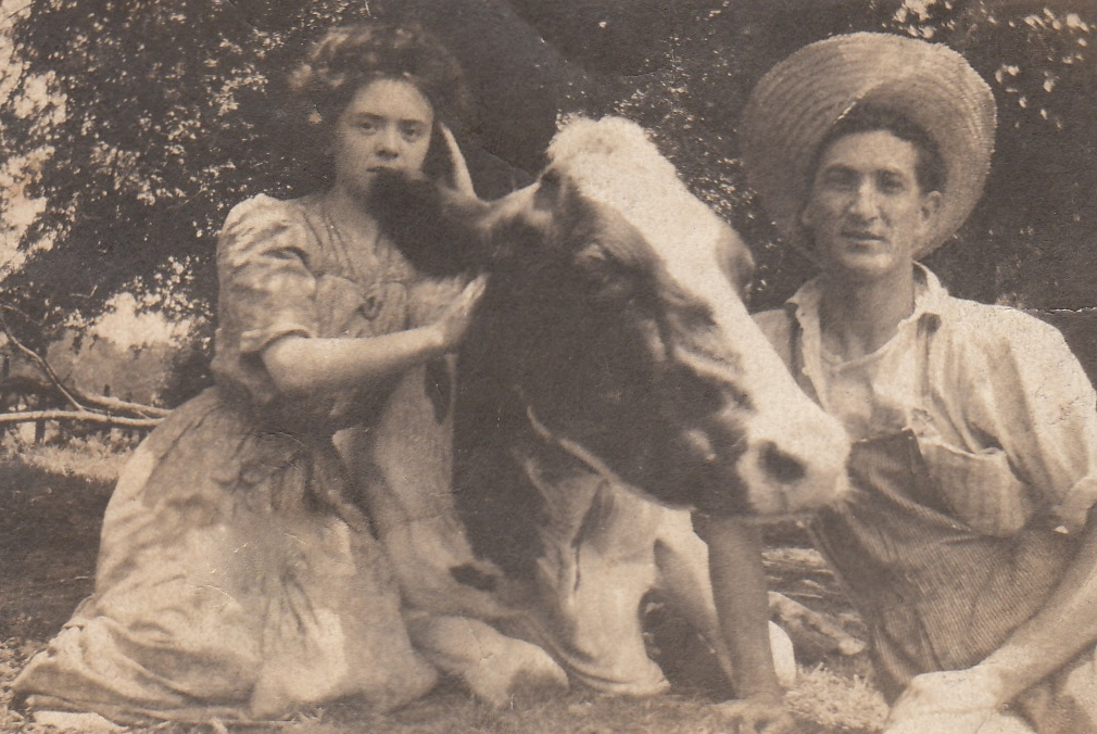 Clara, cow, & CAHSr - Version 2
