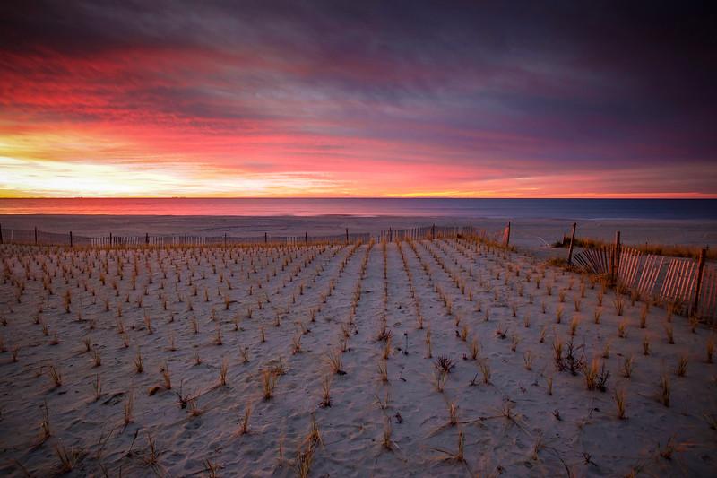 Sunrise Over The Weeds, Rockaway Beach, New York