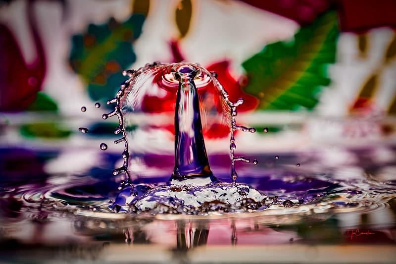 Circus Splash