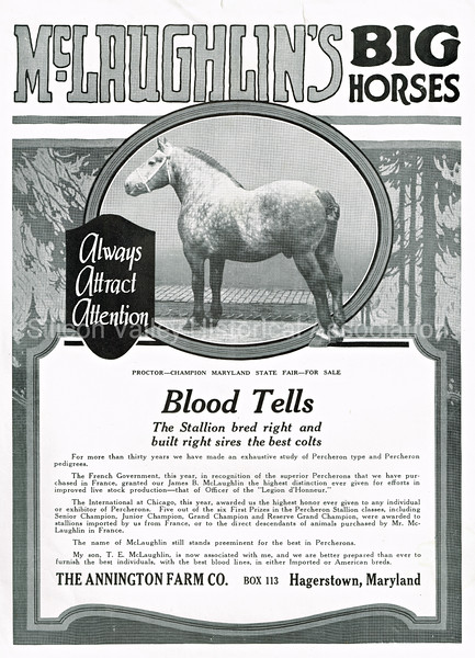 McLaughlin's Big Horses Annington Farm Co. ad from 1915 Hargstown, Maryland