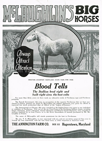 McLaughlin's Big Horses Annington Farm Co. ad from 1915 Hargstown, Maryland