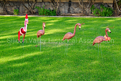 Lawn flamingos at Christmas time