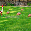 Lawn flamingos at Christmas time