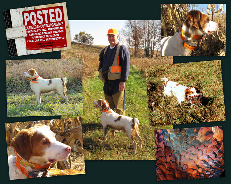 "Collage put together in honor of Pete Vandenberg. Pete and his Brittany Spaniel ""Kit"" were an integral part to the hunt's success."