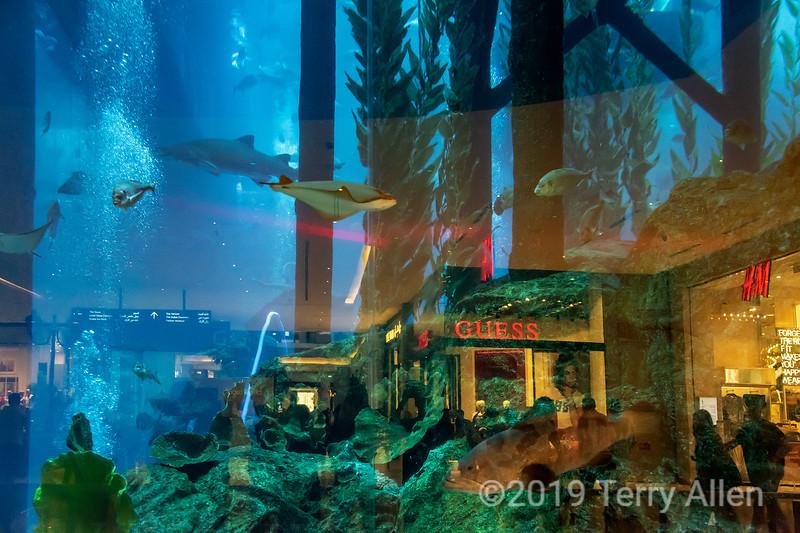 Underwater shopping