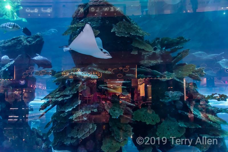 Dubai aquarium with shop reflections, Dubai, UAE