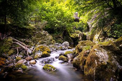 Shimna river. Northern Ireland