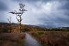 An eerie autumn walk - Brecon Beacons, Wales, United Kingdom