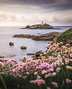 Coastal Springtime! - Godrevy Lighthouse, Cornwall