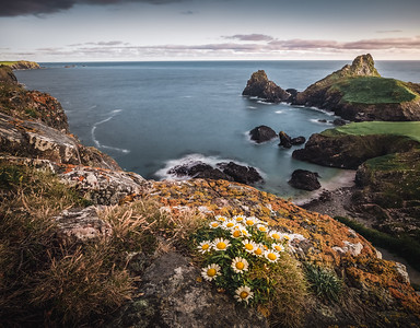 A bunch of flowers - Kynance Cove, Cornwall