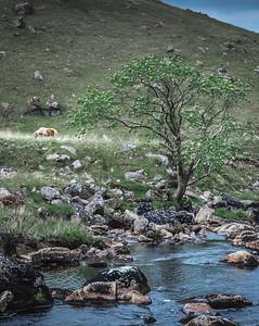Wild Wild Dartmoor - Tavy Cleave, Dartmoor