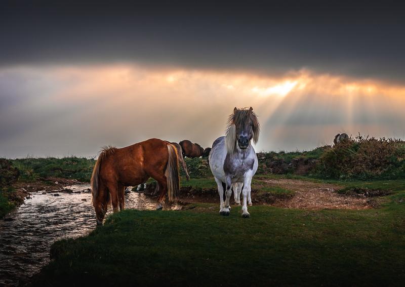 Glorious Nature - Windy Post, Dartmoor