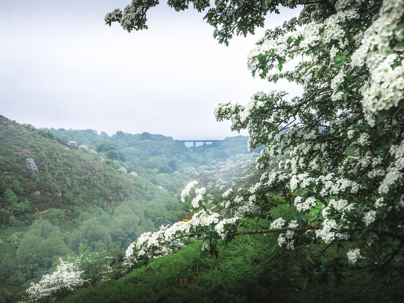 Misty Valley - Meldon Reservoir, Dartmoor