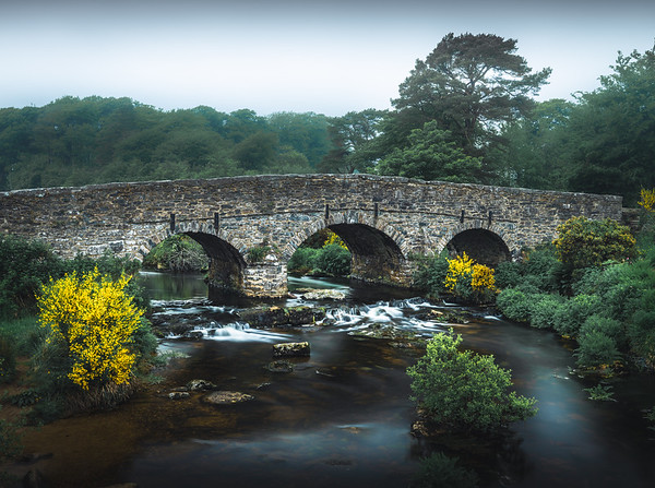 Yellow and Green - Postbridge, Dartmoor