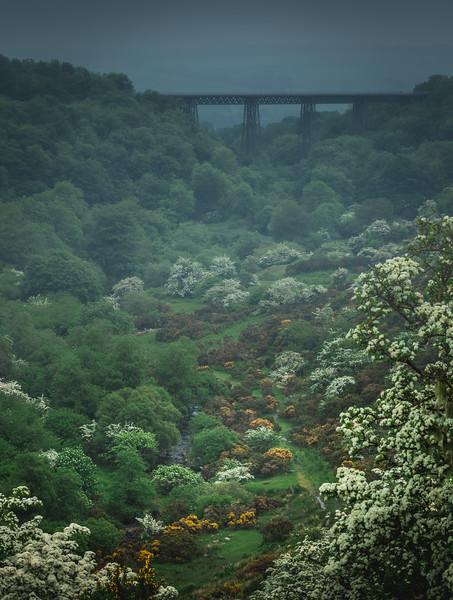 Valley of flowers - Meldon Reservoir, Dartmoor
