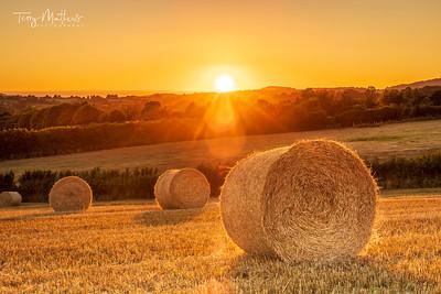 Melplash Harvest Sunset