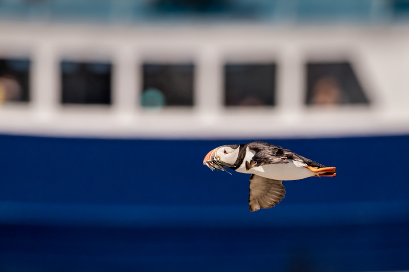 Fly-By - Farne Islands, Northumberland