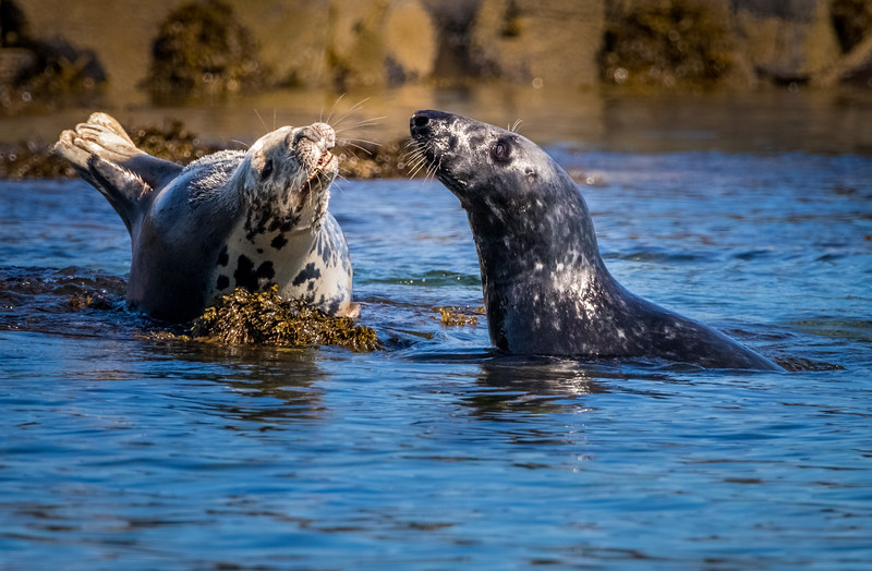 Meet and Greet - Grey Seals, Farne Islands