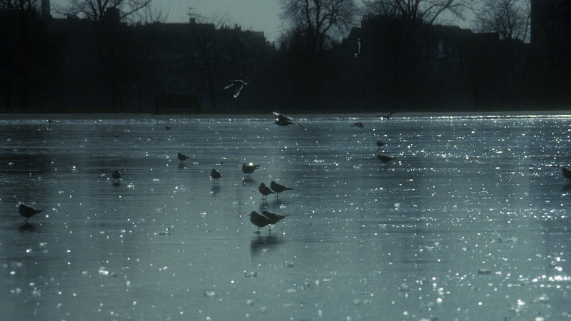 One cold January morning in St. James Park